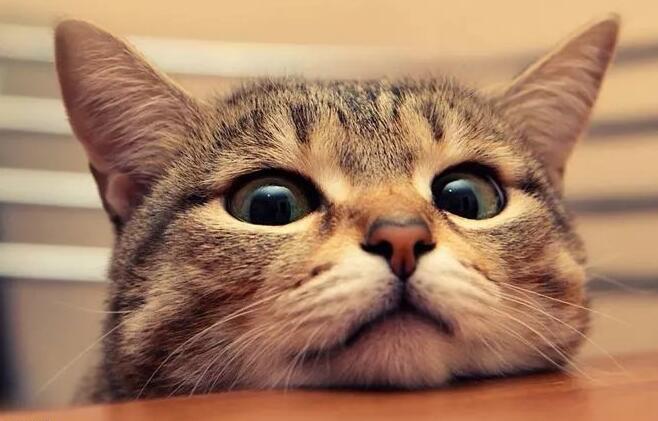 เมื่อแมวมีอาการเหล่านี้ให้ใส่ใจกับปัญหาระบบทางเดินปัสสาวะ!