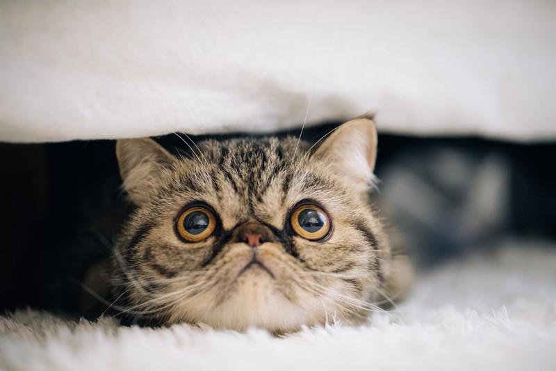 ช่วยแมวนวดกัน! เรียนรู้สามขั้นตอนเหล่านี้