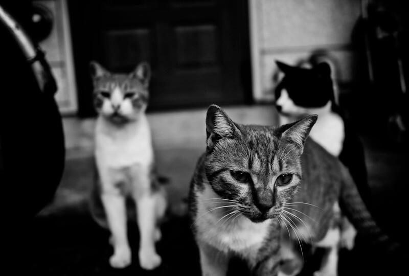 กล่าวว่าแมวสามารถรับบริจาคได้เฉพาะกรุ๊ปเลือดเดียวกันเท่านั้น