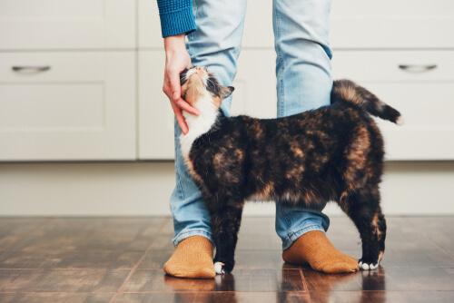 แมวเห่าเพื่อสื่อสารกับมนุษย์? การศึกษาแสดงว่าแมวไม่ค่อยส่งเสียง