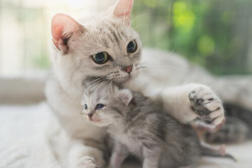 เป็นไปได้ไหมที่แมวและสุนัขจะได้รับบาดทะยัก? วิธีดูแลสัตว์เลี้ยงที่ติดเชื้อ