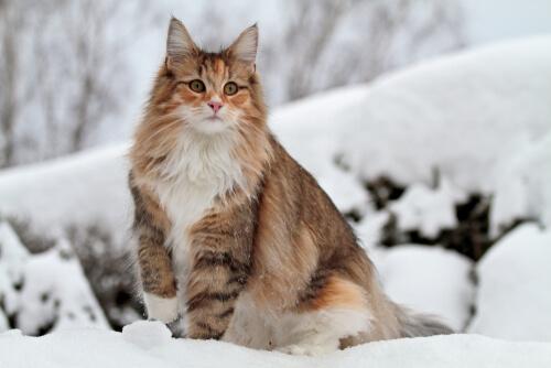 ทำให้แมวคุ้นเคยกับการกอดรัดของเจ้าของเพื่อทำให้การตัดเล็บหรืออาบน้ำง่ายขึ้น