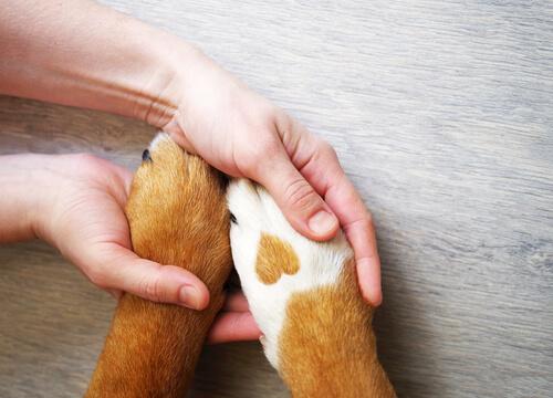 สุนัข peeing ที่เสาโทรศัพท์หรือไม่นี่เป็นวิธีการแสดงเครื่องหมาย