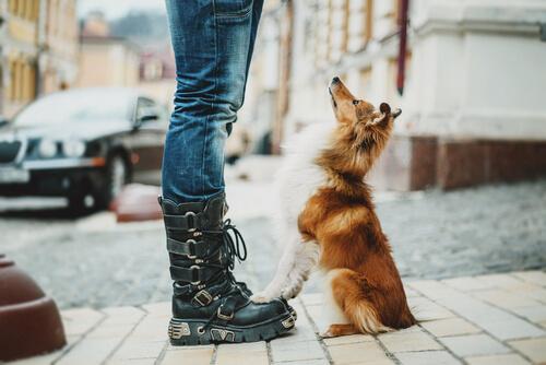สุนัขใช้เวลาเดินนานแค่ไหน? ความรู้ที่เกี่ยวข้องเกี่ยวกับการพาสุนัขไปเดินเล่น