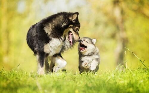 ปกป้องสุขภาพและความปลอดภัยของสุนัขของคุณสามสิ่งที่คุณต้องใส่ใจเมื่อคุณออกไปเดินเล่น!