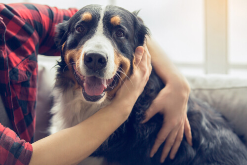 สุนัขก็เปลี่ยนนิสัยการดื่มของพวกเขาเจ้าของต้องให้ความสนใจกับสัญญาณของการเจ็บป่วย