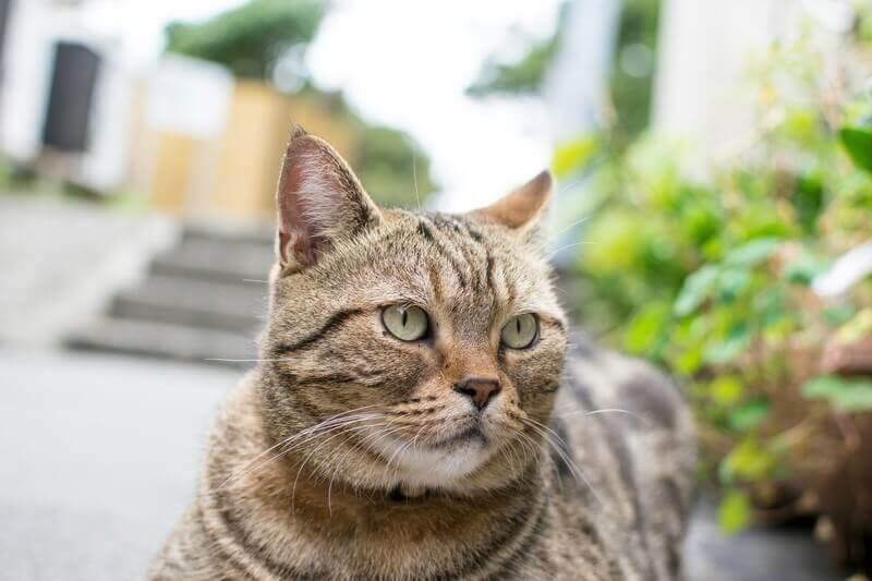 อย่ามอบให้แมว! 4 ส่วนผสมทั่วไปมีพิษร้ายแรงต่อแมว!