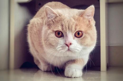 ฉันจะกำจัดหมัดแมวของฉันได้อย่างไร