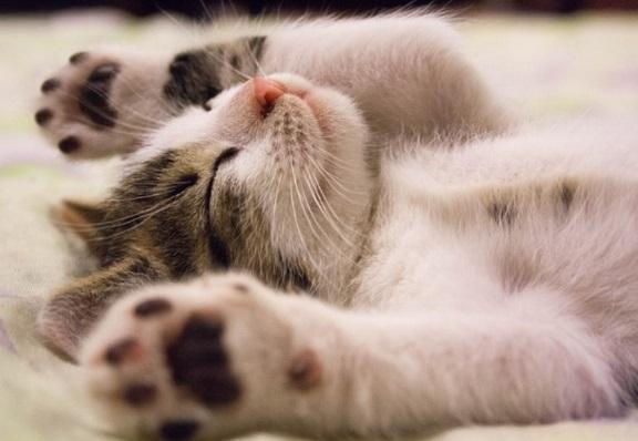 เกิดอะไรขึ้นถ้าแมวทินเนอร์?