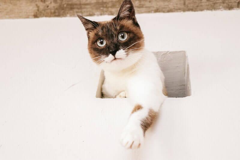 ความเมตตาของแมวชอบกัดทุกที่และทิ้งร่องรอย