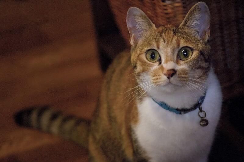 ความลับของนักเรียนที่เป็นเส้นตรงของแมวคืออะไร?