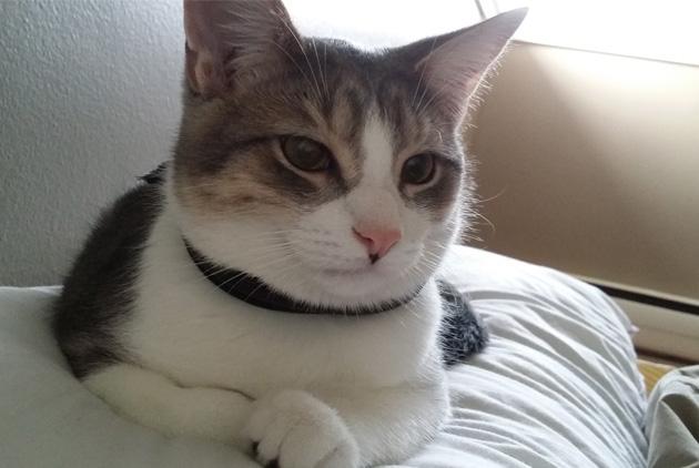 จะทำอย่างไรเมื่อแมวข่วนบ่อย