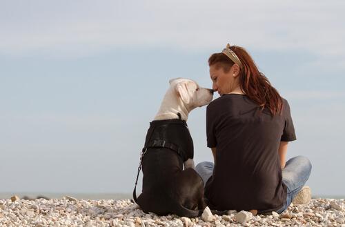 สลัดเป็นอาหารที่ไม่ต้องใช้เวลาในการปรุงอาหารและสามารถเตรียมได้อย่างรวดเร็วสำหรับสุนัข