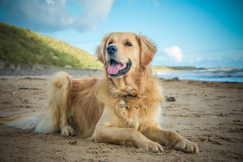 ชามเนื้อกับถั่วงอกและพริกมีสุขภาพดีสำหรับสุนัข