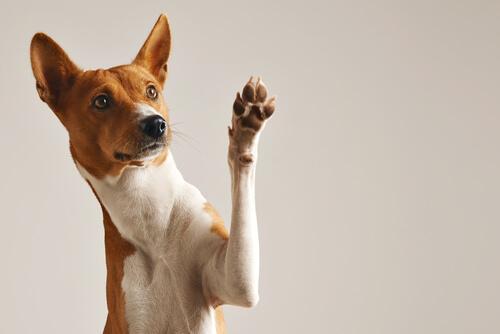 สิ่งสำคัญคือต้องมีระเบียบวินัยสุนัขที่จะไม่ใช้ความไว้วางใจและการละเมิดเพื่อสร้างความไว้วางใจ