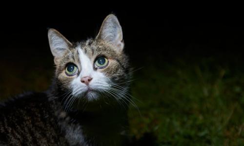 ข้อควรระวังในการดูแลแมวป่วยที่บ้าน