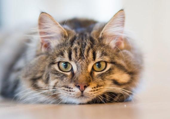 แมวที่มีอายุมากกว่าควรกินอะไร