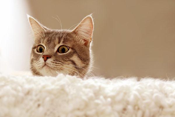 จะทำอย่างไรถ้าแมวกินช็อคโกแลตโดยไม่ตั้งใจ