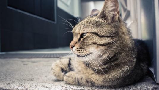สิ่งที่ควรรู้ก่อนที่จะเคลื่อนไหวกับแมว