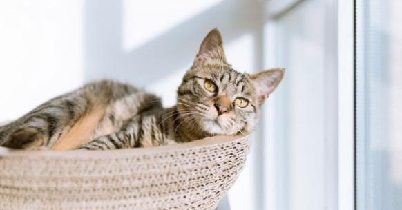 เกิดอะไรขึ้นถ้าแมวท้องผูก?