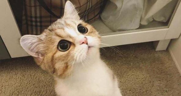 คำแนะนำสำหรับการออกไปเที่ยวกับแมว